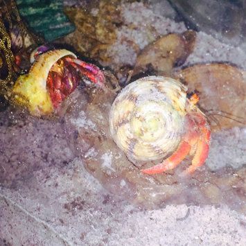 Photo of Baker & Taylor Hermit Crabs For Dummies uploaded by Debrann M.