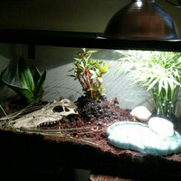 Zoo MedTM Eco Earth Loose Reptile Substrate uploaded by Hannah S.