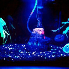 GloFish GLOAFish Starter Kit Aquarium uploaded by Maggie S.