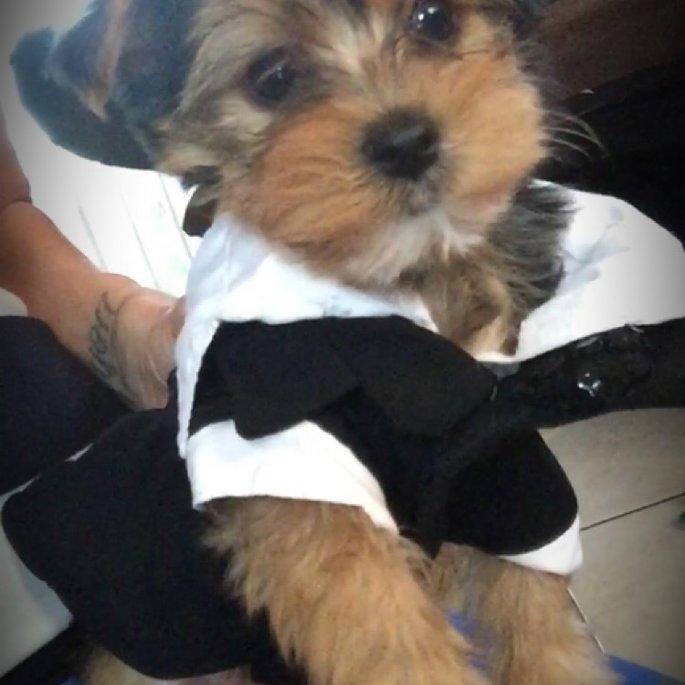 Top PawA Wedding Tux uploaded by Jocelyn a.