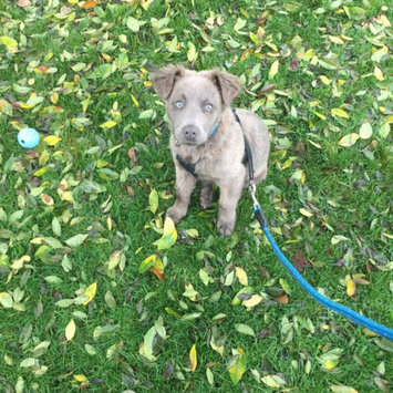 Photo of Blue Buffalo Life Protect Chicken Puppy Food 15lb uploaded by Erika B.