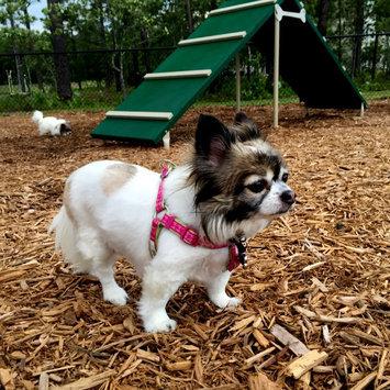 Photo of Martha Stewart PetsA Houndstooth Dog Harness uploaded by Samara O.