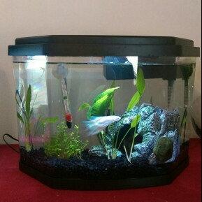 Top Fin® 3.5 Gallon Enchant Aquarium uploaded by Heidi P.