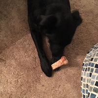 Nylabone Daily Health Chews Roast Beef Flavor - 2 CT uploaded by Mary R.