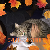 Tempations MixUps Surfers' Delight Treats for Cats uploaded by Erika K.