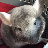Super Pet Chinchilla Sleep-N-Ledge Habitat Attachment uploaded by Bonni N.