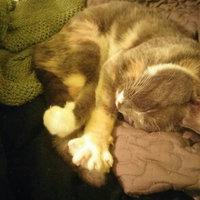 Purina Kitten Chow PurinaA Kitten ChowA Nurture Kitten Food uploaded by Lindsay T.