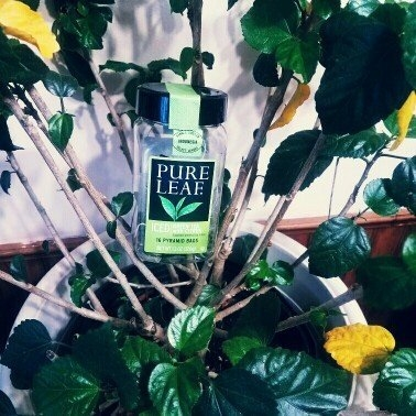 Pure Leaf Iced Green Tea with Citrus uploaded by Renee B.