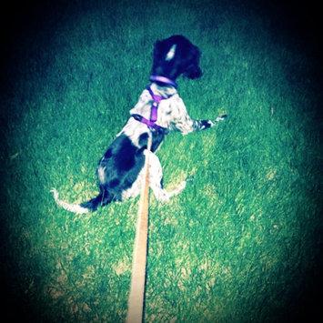 KONGA Comfort Dog Collar uploaded by Rachel S.