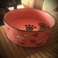 Whisker CityA Paris Cat Bowl uploaded by Jared B.