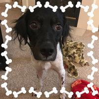 Furminator FURminatorA Long Hair Deshedding Dog Tool uploaded by Rachel F.