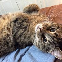 Whiskas Temptations Savory Salmon Flavor Cat Treats uploaded by Alysia C.