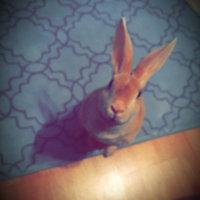 Kaytee Fiesta MAX Food for Rabbits, 3.5 lbs. uploaded by Nathali C.