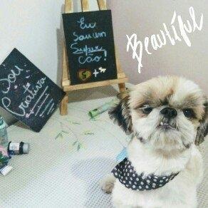 Lupine Pet 746889142072 Puppy Love 4 Ft. Lead uploaded by Glauciane R.