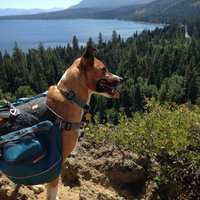 Ruffwear Approach Dog Pack Pacific Blue, M uploaded by Paw And Foot
