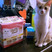 Photo of Fancy Feast Grilled Poultry and Beef Feast Variety Cat Food, 30-Count uploaded by Brittany K.