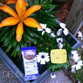 Photo of Curate™ Dark & Tempting Snack Bar uploaded by Jessica  v.