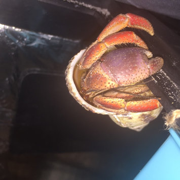 Zoo Med Laboratories Zml Heater Hermit Crab uploaded by Debrann M.