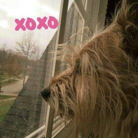 Photo of Muttluks 4-Legged Dog Jog Rain Suit, Size 18, Pink uploaded by Tati R.