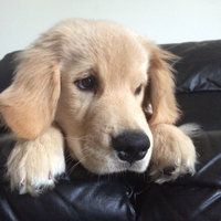Nylabone Puppy Teething Keys uploaded by Katie S.