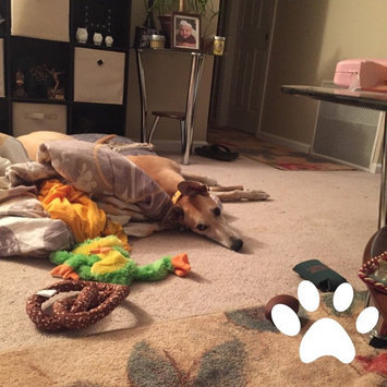 Photo of Kong Wild Whole Elk Antler For Dogs uploaded by Jessie H.