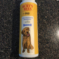 Burt's BeesTM Itch Soothing Dog Shampoo uploaded by Jody M.