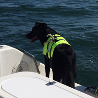 Paws Aboard Doggy Life Jacket in Yellow, Large uploaded by Mary R.