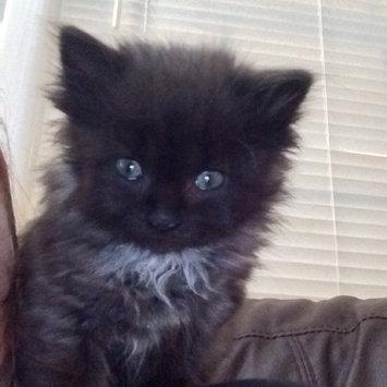 Photo of TEMPTATIONS™ Classic Treats For Cats Hearty Beef Cat Treats uploaded by Amanda C.
