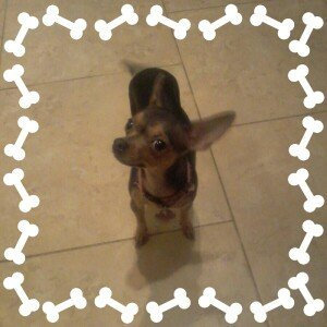 Photo of ASPCA uploaded by Lulu C.