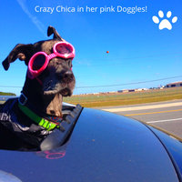Doggles ILS Lense Dog Goggles in Pink uploaded by Rebecca P.