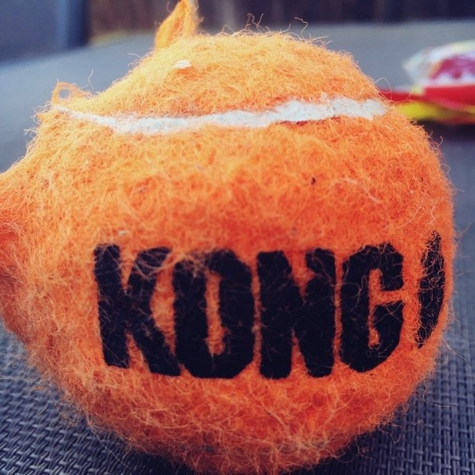 KONG AirDog Squeaker Tennis Ball uploaded by Arianna Z.