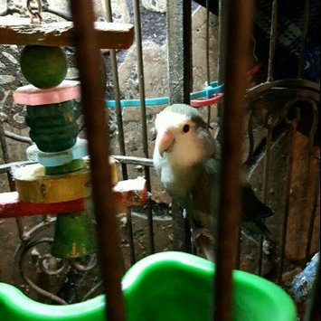 Photo of Sun Seed Kaytee Products Wild Bird Gold Spray Millet Treat uploaded by Diana W.