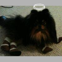 Hugs Pet Products Pugz Dog Shoes uploaded by Jenna M.