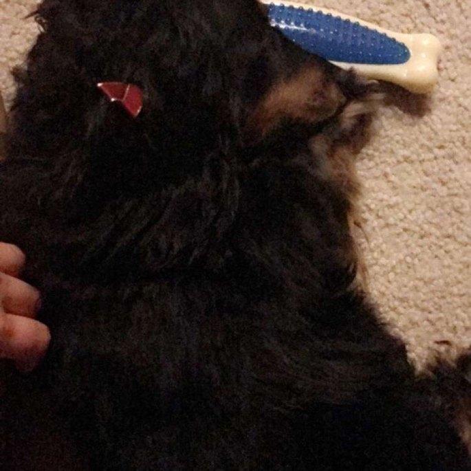 Nylabone Dura Chew Bone Dog Toy uploaded by Brittany M.