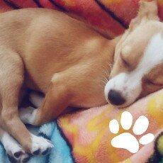 Photo of ASPCA uploaded by Zaire O.
