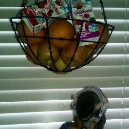 Photo of Apple & Eve® 100% Juice Organics Tart Cherry Juice 33.8 fl. oz. Carton uploaded by Jenn C.