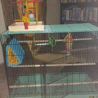 Prevue Pet Products Cockatiel Playpen - Yellow (Medium) uploaded by Nikki L.
