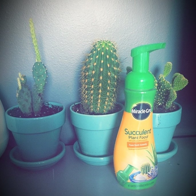 Miracle Gro 8 Oz Foaming Succulent Plant Food (1000531) uploaded by Kelsey B.