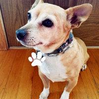 Seresto Flea & Tick Dog Collar uploaded by Britt G.
