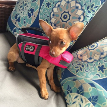 Photo of Outward Hound Dog Lifejacket uploaded by Liz C.