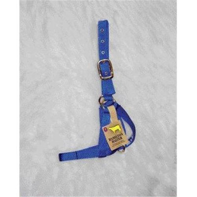 Hamilton Halter Company - Cow Turn Out Halter- Blue 1 Inch - 30DC BL