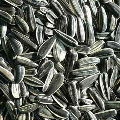 Seeds BG18014 Seeds Sunflower Seeds R-S - 1x25LB