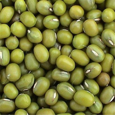 Bulk Peas & Beans Organic Bulk Peas And Beans Organic 100 percent Organic Mung Beans 25 Lbs - SPu491167