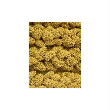 Higgins Pet Food HS60002 5 lb Sunshine Spray Millet