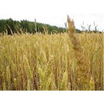Niblack Wheat Germ Toasted 25 Lbs - SPu783605
