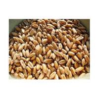 Bulk Grains 100 percent Organic Hulled Spelt Berries Bulk 25 Lbs - SPu465294
