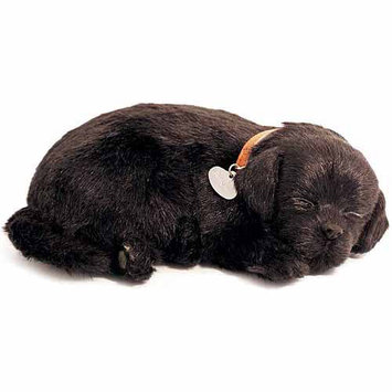 Perfect Petzzz Breathing Lab in Black
