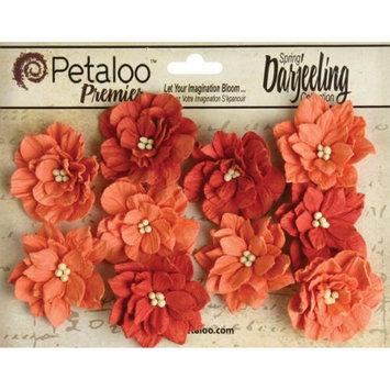 Petaloo Darjeeling Teastained Dahlia Flowers 10/Pkg-Spice