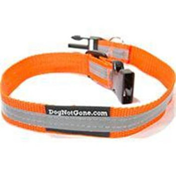 Dog Not Gone Seen and Secure Reflective Dog Collar Size: Large