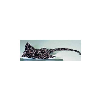 Wavey Spotted Eagle Ray 16.5 by Douglas Cuddle Toys